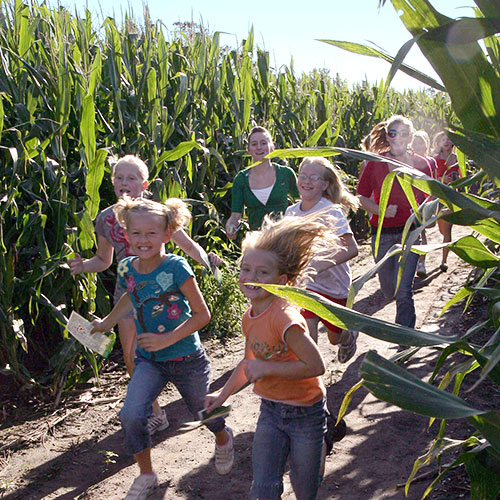 Explore the worlds largest corn maze and our many maze games here at Richardson Adventure Farm in Spring Grove, Illinois.