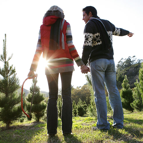 Explore our Choose and Cut Christmas Tree Farm