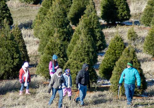 School field trips help students learn about farms and how Christmas trees are grown and wreaths are made, Winter School Field Trip to Richardson Adventure Christmas Tree Farm in Spring Grove, Illinois, NW of Chicago.