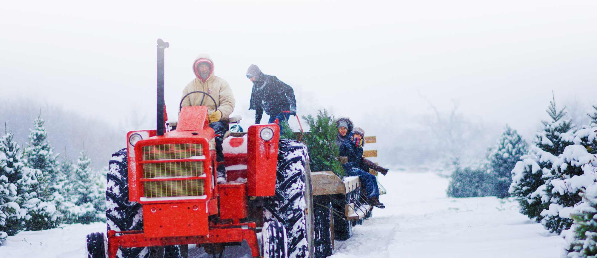 Take a wagon ride out to our Cut-your-own Christmas Tree Farm at Richardson Christmas Tree Farm in Spring Grove, Illinois