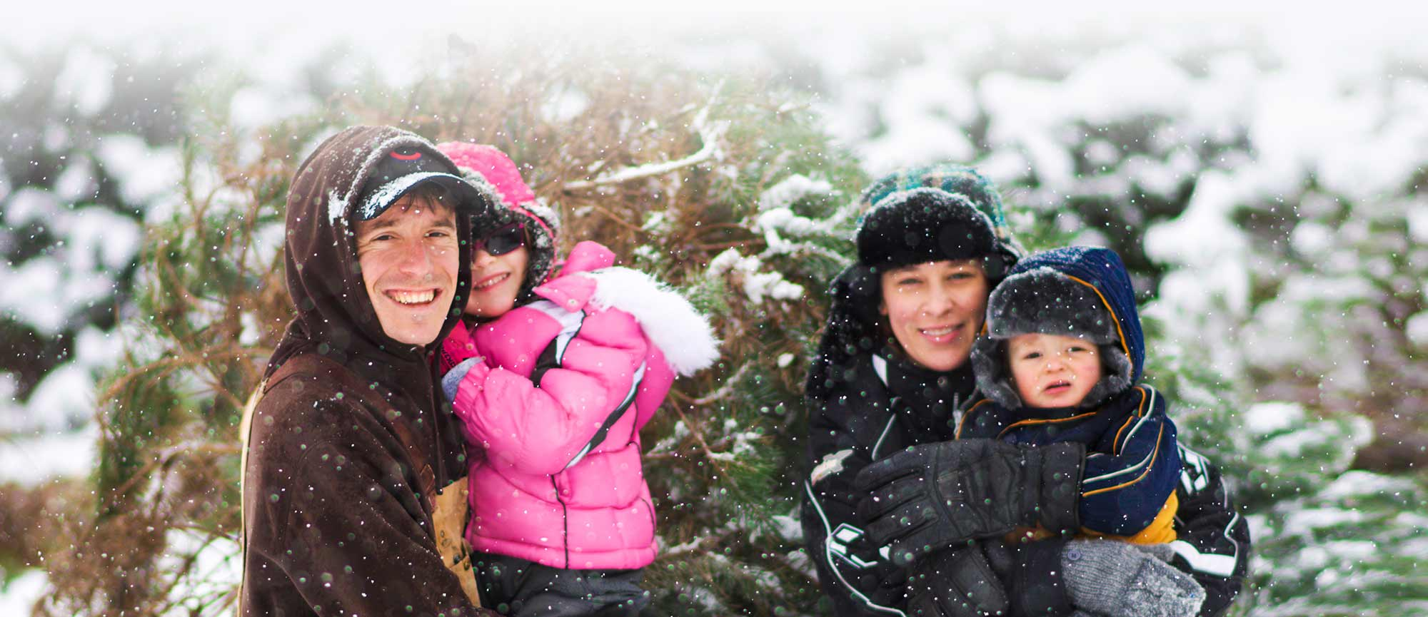 Cut-your-own live Christmas tree at Richardson Christmas Tree Farm in Spring Grove, Illinois