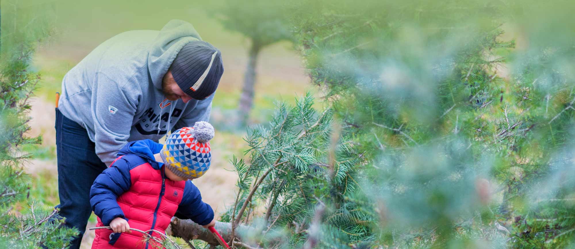 Start a Christmas Family Tradition at Richardson Christmas Tree Farm in Spring Grove, Illinois