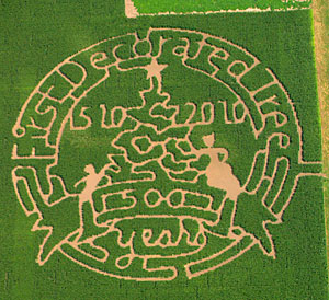 Celebrating 500 years of live Christmas trees with a corn maze, Celebrating Choose and Cut Live Christmas Trees at Richardson Adventure Farm in Spring Grove, Illinois, NW of Chicago.