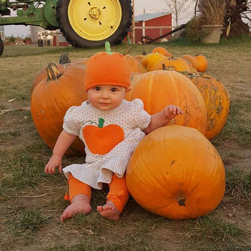 Pick-your-own pumpkin in our u-pick pumpkin patch at Richardson Adventure Farm in Spring Grove, Illinois