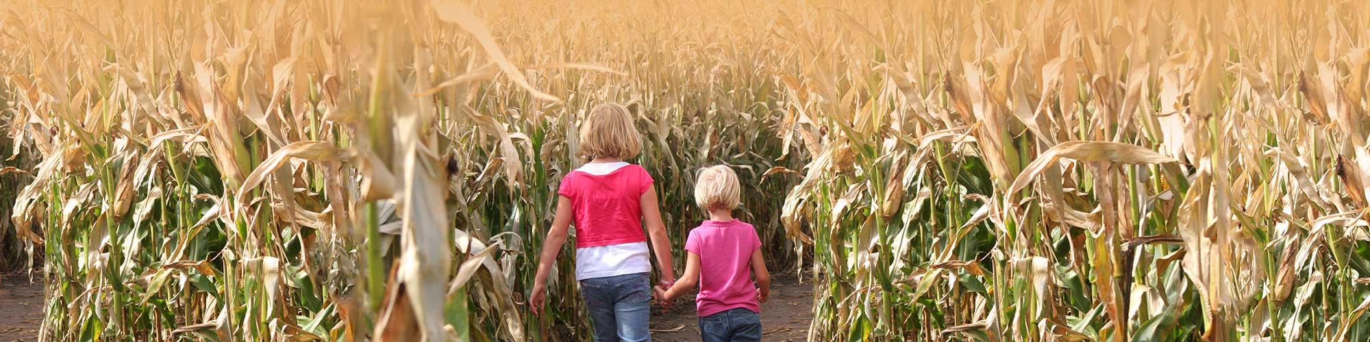 The World's Largest Corn Maze at Richardson Adventure Farm