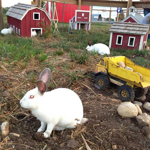 Make a furry friend in bunnyville