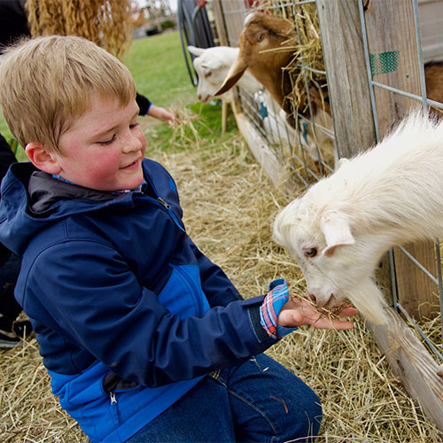 Feed our goats in our petting zoo!