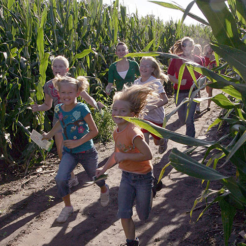 Explore our giant corn maze and corn maze games>  </p><h2>World's Largest, Most Intricate Corn Maze</h2><div class=