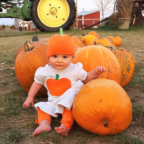 Explore our u-pick pumpkin patch for your very own pick-your-own pumpkin!